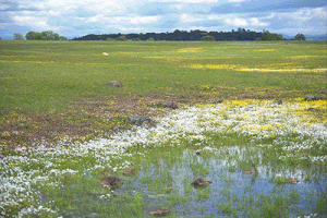 Vernal Pools, from ECOS
