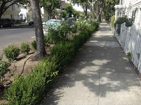 garden sidewalk buffer on Q Street